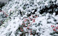 Mưa Tuyết Đầu Mùa