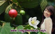 Cây Hoa Trứng Cá