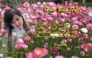 Thơ Tranh: Hoa Bất Tử